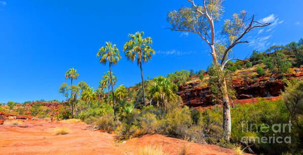 Central Australia Photograph - Palm Valley Central Australia  by Bill  Robinson