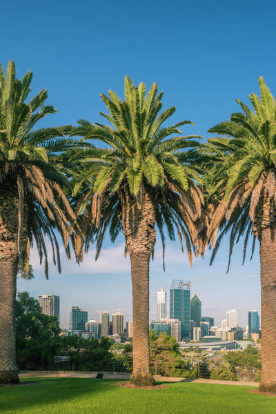 Distant Trees Wall Art - Photograph - Perth City And Cbd From Kings Park by Stefan Mokrzecki
