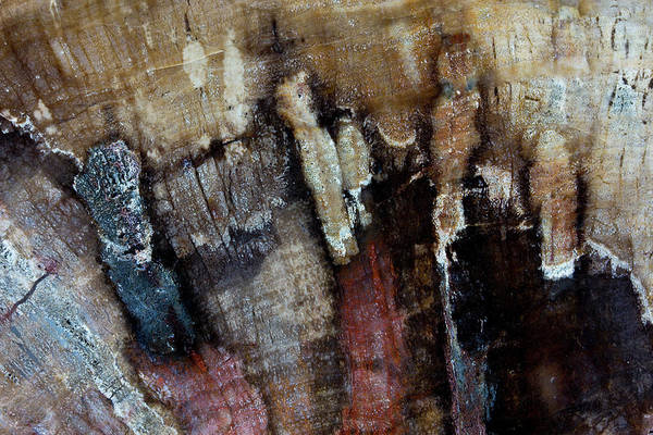 Petrified Wood Photograph - Petrified Wood Close-up by Darrell Gulin