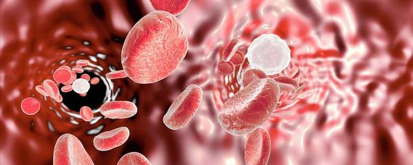 Wall Art - Photograph - Red Blood Cells by Kateryna Kon/science Photo Library