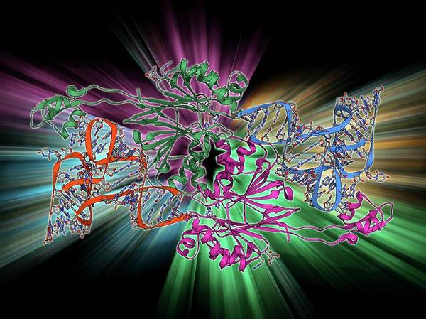 Double Helix Photograph - Ribonuclease Bound To Transfer Rna by Laguna Design
