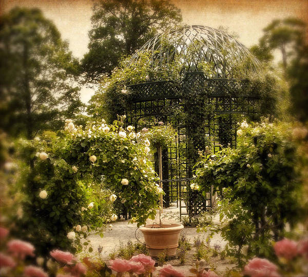 Arbor Photograph - Rose Arbor by Jessica Jenney