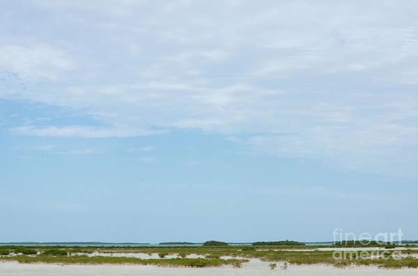 Mangroves Digital Art - Scenes From Key West by Carol Ailles