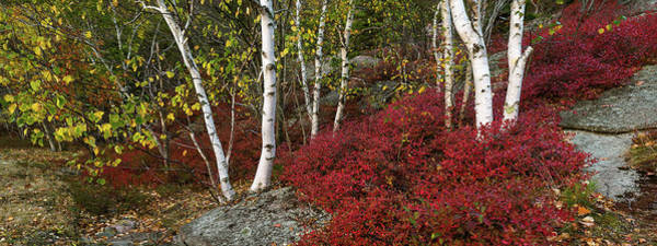 Mount Desert Island Photograph - Trees In Forest During Autumn, Mount by Panoramic Images