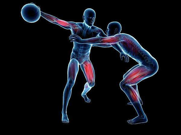 Wall Art - Photograph - Two Basketball Players by Sciepro/science Photo Library