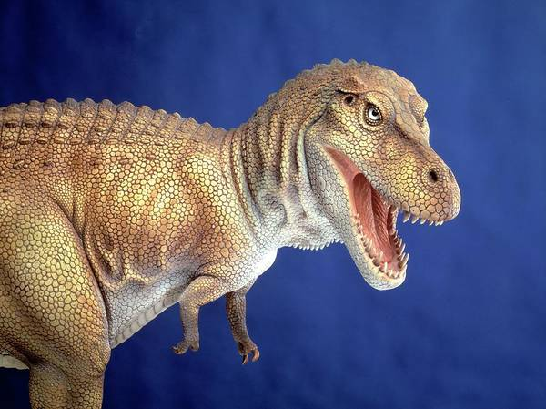 Wall Art - Photograph - Tyrannosaurus Rex Model by Natural History Museum, London/science Photo Library