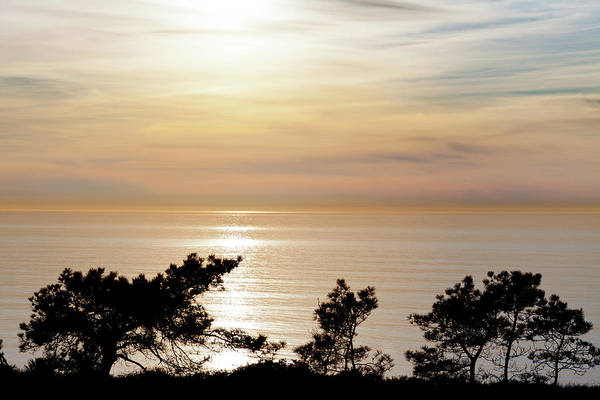 Torrey Pines Photograph - Usa, California, La Jolla by Jaynes Gallery