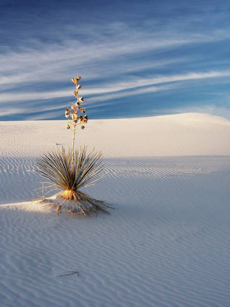 Away From It All Wall Art - Photograph - Usa, New Mexico, White Sands National by Terry Eggers