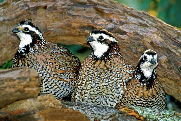 Avian Wall Art - Photograph - Usa, Texas, Rio Grande Valley, Mcallen by Jaynes Gallery