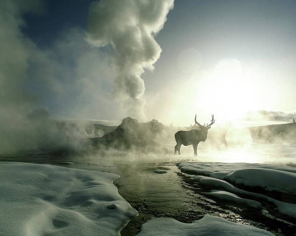 Wall Art - Photograph - Usa, Wyoming, Yellowstone National Park by Jaynes Gallery