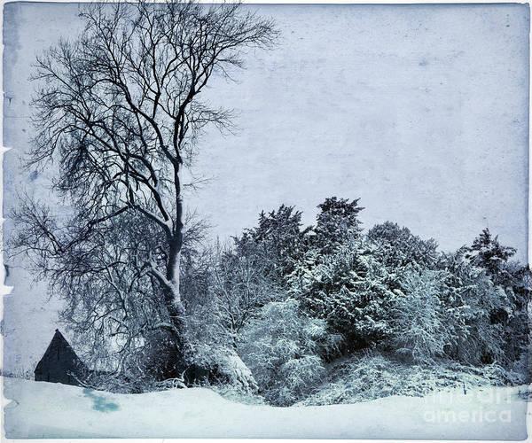 Wall Art - Photograph - Wintery Landscape by Angel Ciesniarska