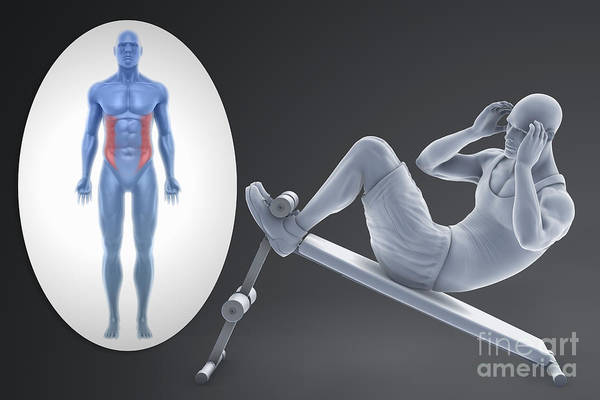 External Abdominal Oblique Photograph - Exercise Workout by Science Picture Co