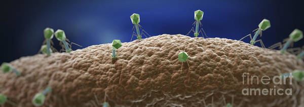 Wall Art - Photograph - Bacteriophages by Science Picture Co