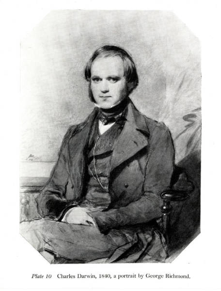 Wall Art - Photograph - Charles Darwin by Natural History Museum, London/science Photo Library