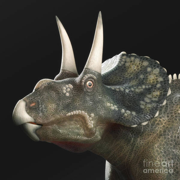 Diceratops Photograph - Dinosaur Diceratops by Science Picture Co