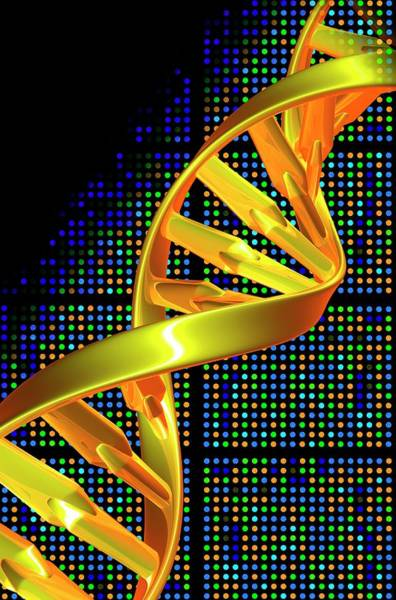Biochemistry Photograph - Dna Microarray And Double Helix by Pasieka