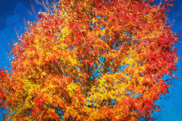 Photograph - Fall Foliage Sussex County New Jersey Painted  by Rich Franco