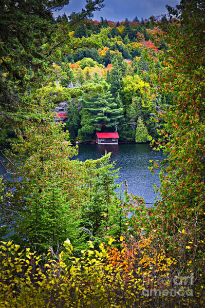 Algonquin Park Photograph - Fall Forest And Lake by Elena Elisseeva