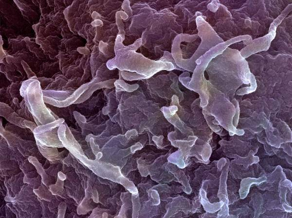 Wall Art - Photograph - Lymphocyte by Ami Images/science Photo Library