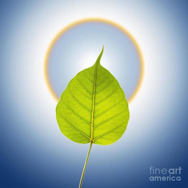 Faith Mixed Media - Pho Or Bodhi by Atiketta Sangasaeng