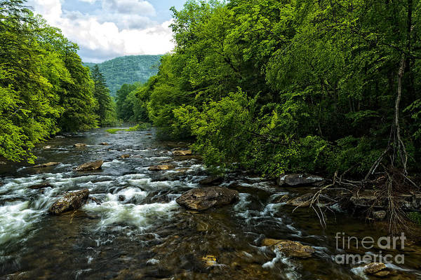 Allegheny Mountains Wall Art - Photograph - Spring Along Cranberry River by Thomas R Fletcher