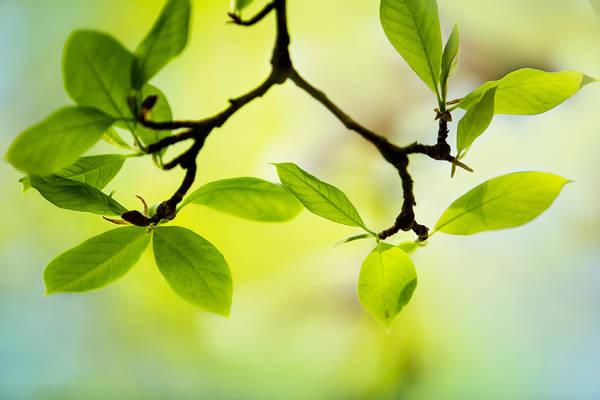 Branch Wall Art - Photograph - Spring Green by Nailia Schwarz