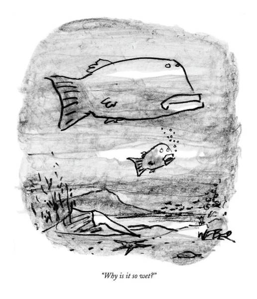 Fish Drawing - Why Is It So Wet? by Robert Weber