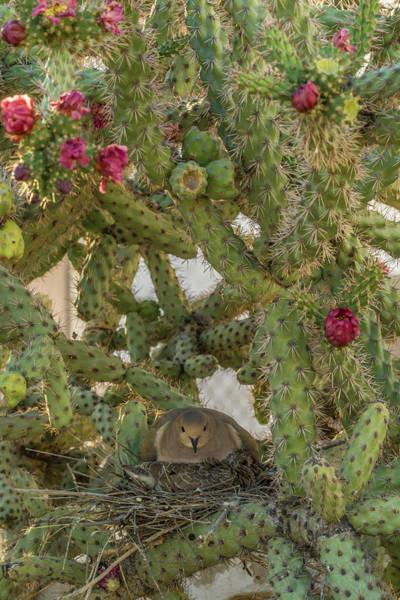 Cactus Flower Photograph - Usa, Arizona, Sonoran Desert by Jaynes Gallery