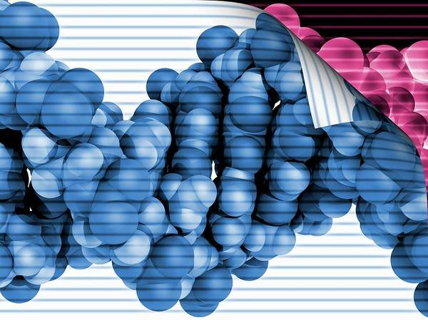 Wall Art - Photograph - Dna Molecule by Laguna Design/science Photo Library