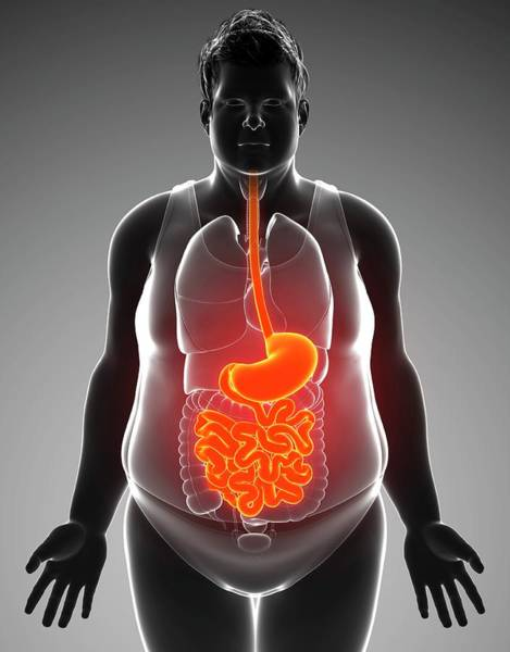 Wall Art - Photograph - Human Digestive System by Pixologicstudio/science Photo Library