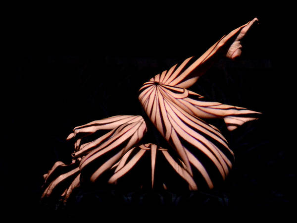 Photograph - 9439 Experimental Nude Abstract by Chris Maher
