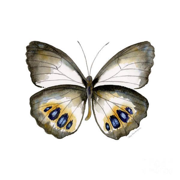 95 Palmfly Butterfly Art Print
