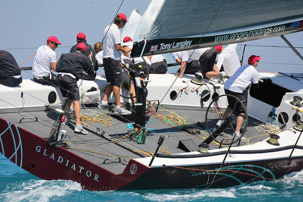 Bacardi Photograph - Miami Regatta by Steven Lapkin