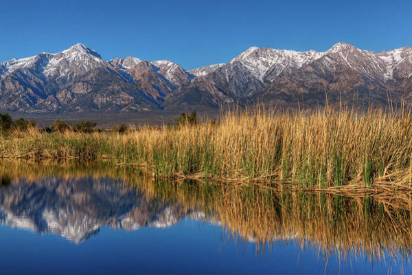 Cattails Wall Art - Photograph - Usa, California, Sierra Nevada Mountains by Jaynes Gallery
