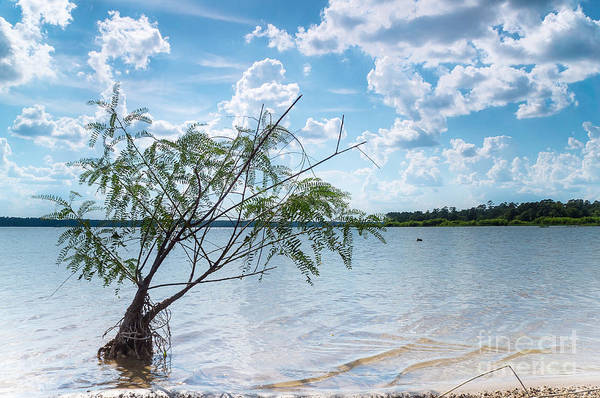 Wall Art - Photograph - A Baby Willow Tree On A Beach by Ellie Teramoto