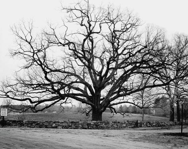 Wall Photograph - A Bare Oak Tree by Tom Leonard