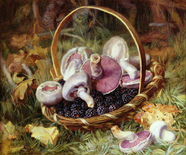 Wall Art - Drawing - A Basket Of Wild Mushrooms by Jabez Bligh