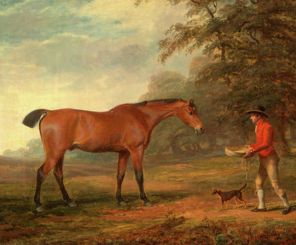 Wall Art - Painting - A Bay Horse Approached By A Stable-lad With Food by Litz Collection