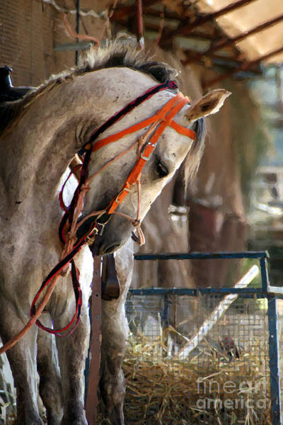 Photograph - A Beautiful Horse by Doc Braham