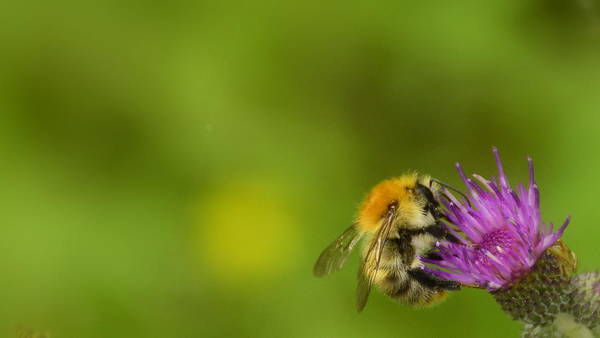 Brillante Photograph - A Bee In The Flower by HQ Photo