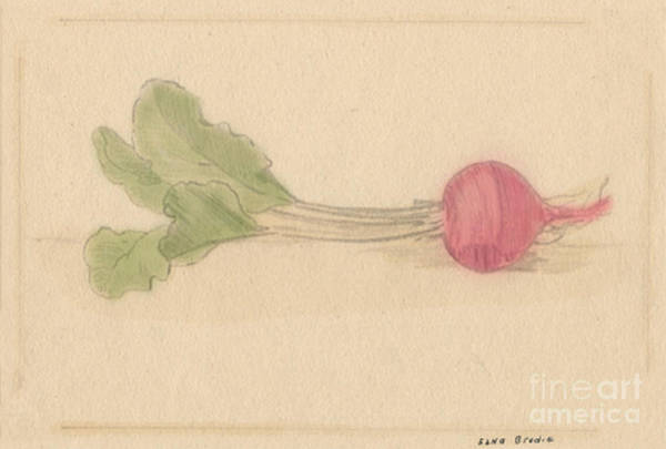 Drawing - A Beet And Greens by Donna L Munro