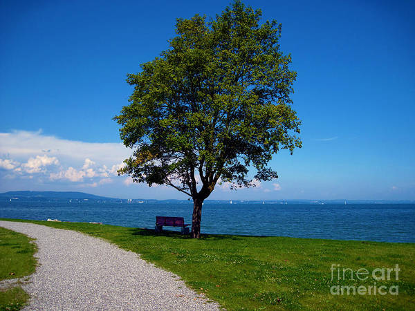 Photograph - A Bench At The Lake Of Konstanz by Susanne Van Hulst