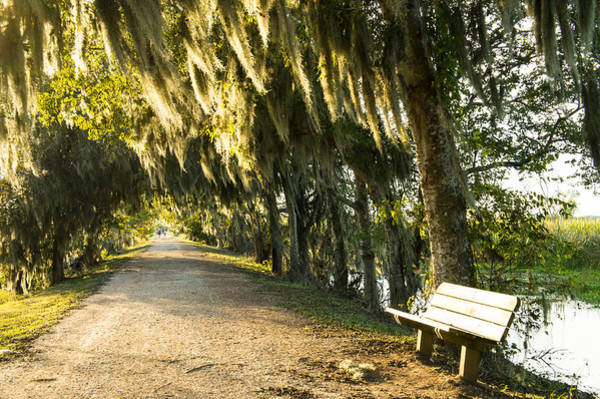 Wall Art - Photograph - A Bench Under Golden Spanish Moss by Ellie Teramoto