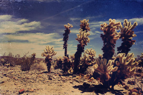 Joshua Tree National Park Wall Art - Photograph - A Billion Needles Went Into My Heart by Laurie Search