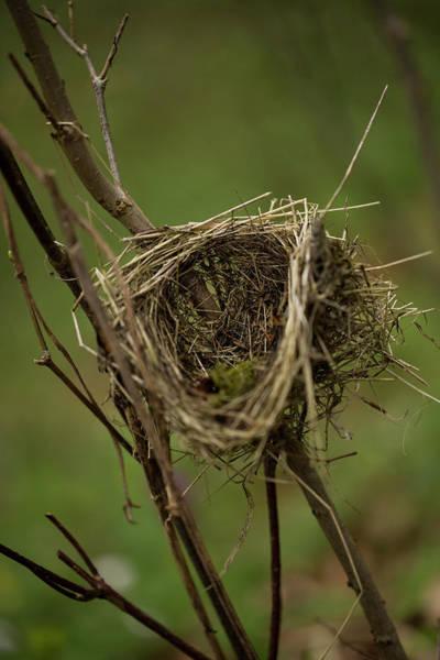 Empty Nest Wall Art - Photograph - A Bird-nest. Rhoen Mountains, Germany by Sebastian Kujas