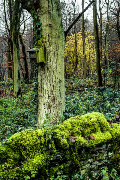 Photograph - A Birdhouse In The Woods by Dennis Dame