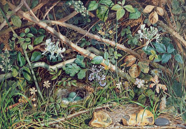 Wild Flowers Drawing - A Birds Nest Among Brambles by John Sherrin