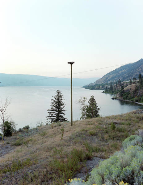 Down The Drain Wall Art - Photograph - A Birds Nest Overlooks Okanagan Lake by Andrew Querner