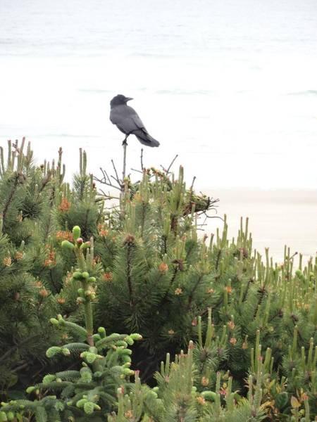 Empty Nest Wall Art - Photograph - A Bird's Perch by Lizbeth Bostrom