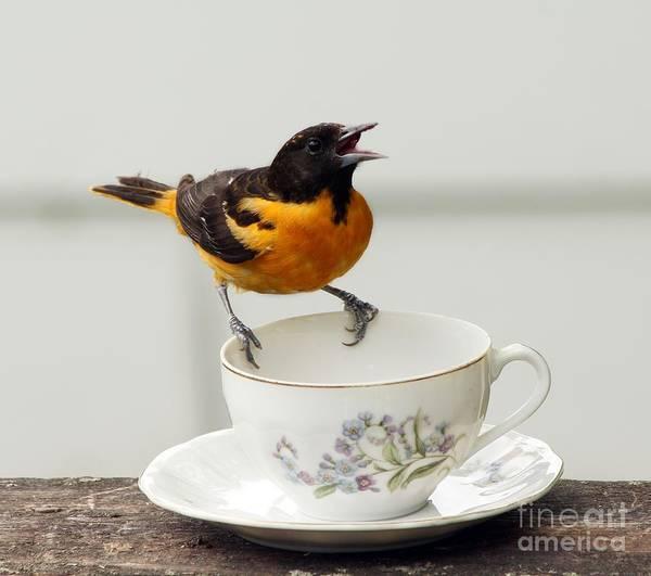 Wall Art - Photograph - A Bit Of Tea Please  by Lori Tordsen